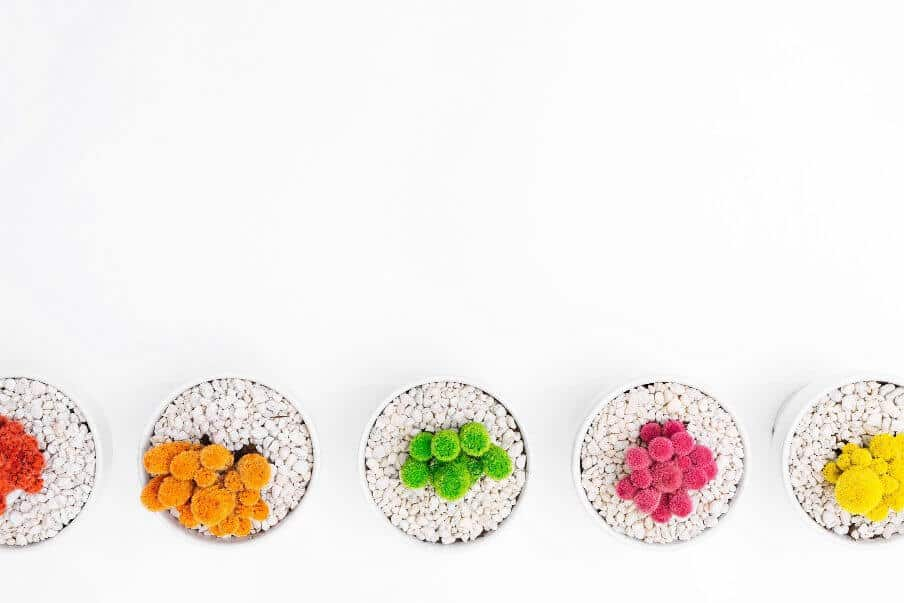 A line of potted plants in flower viewed from above and in flower against a white background